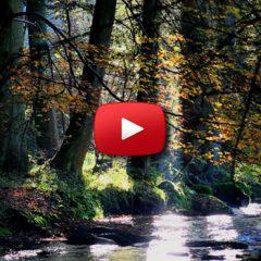 The Tree Video 13